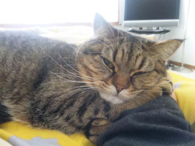 腕枕で寝る与六