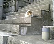 須賀神社の猫