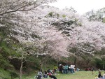 逗子市桜山中央公園