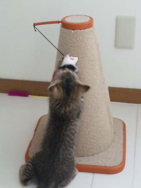 ネズミのおもちゃ2