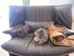 我が家のソファーにて