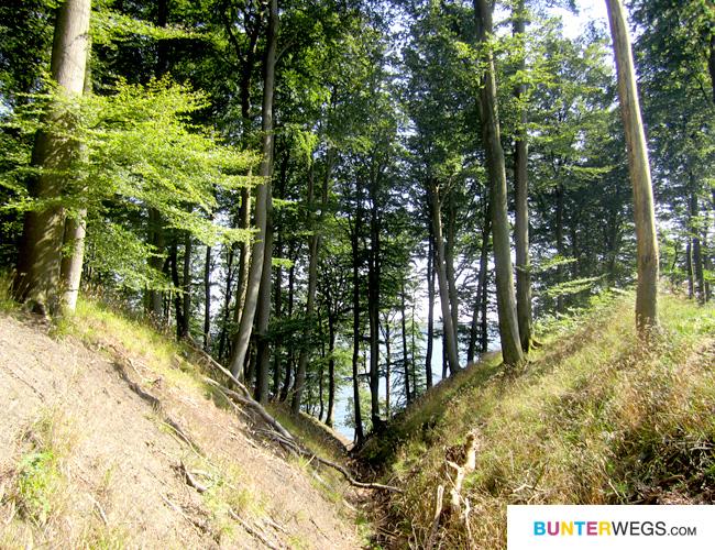 aber auch durch Wald * Gendarmstien, Dänemark * BUNTERwegs.com