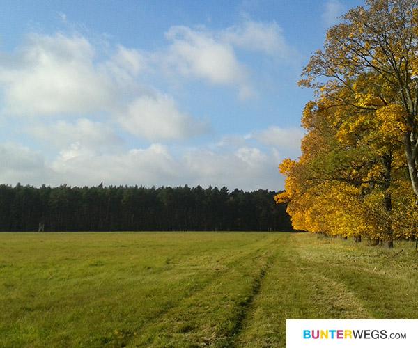 Der Herbst <3