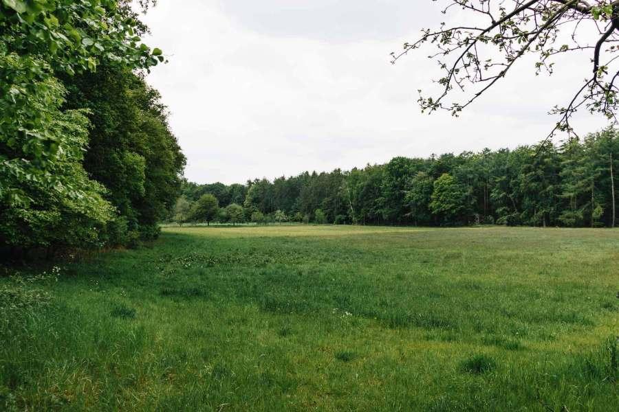 Eine Wiese umgeben vom Wald