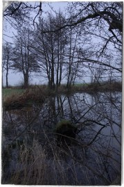 At The Pond2