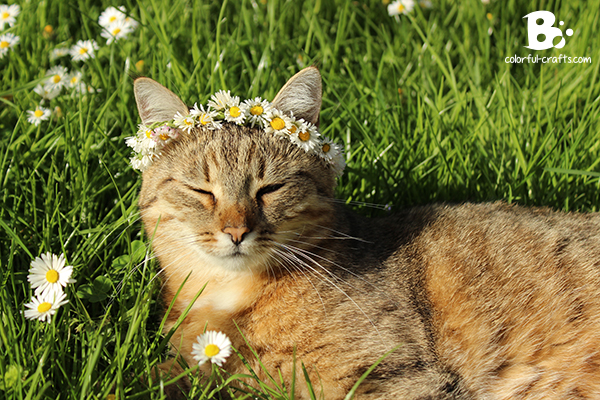 Daisy_Crown_15
