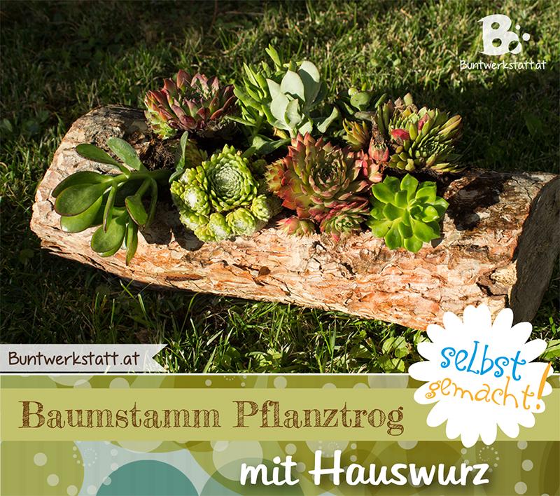 Anleitung: Baumstamm Pflanztrog mit Hauswurz