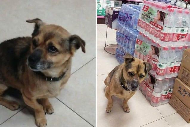 Cane aspetta da tre mesi il padrone morto di coronavirus