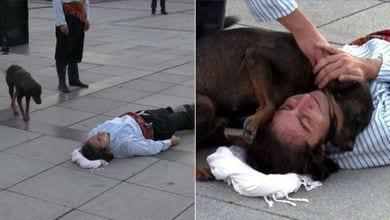 Un attore si finge ferito, un cane randagio interrompe la performance per confortarlo
