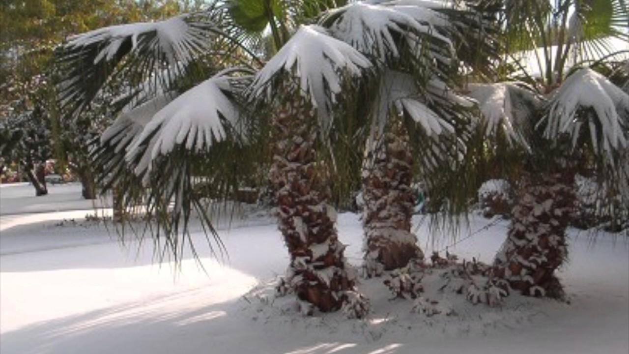 Risalente Florida