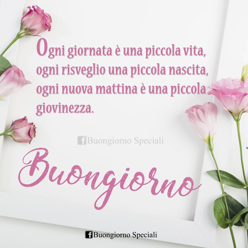 Fiori rosa su sfondo bianco e scritta: Ogni giornata è una piccola vita, ogni risveglio una piccola nascita, ogni nuova mattina una piccola giovinezza. Buongiorno