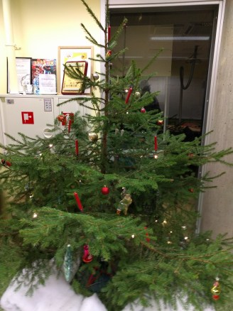 This is the fully-decorated lab Christmas Tree which we fetched from a local forest.