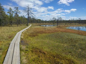 Example of path laid through the bog.