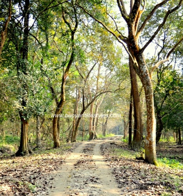 Pobitora Wildlife Sanctuary + Pobitora #pobitorawildlifesanctuary #guwahati + Tourist places in Guwahati