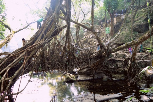 #travelblogger #Mylwnnong #meghalaya #cleanestvillage #travel #northeastindia