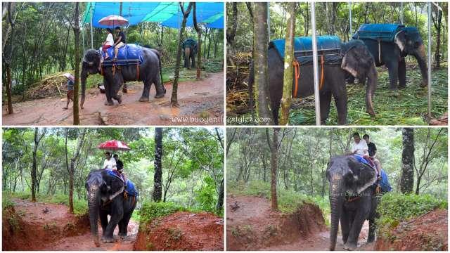 #kerela #elephantride #southindia