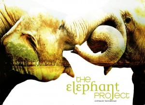 The Elephant Project