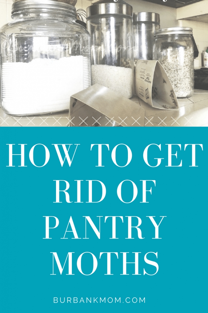 How To Get Rid Of Pantry Moths   Burbank Mom