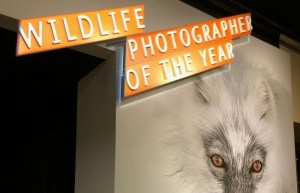 Breathtaking Images Are On Display In 'The Wildlife Photographer Of The Year', Now Open At NHMLA