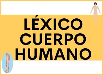 Léxico cuerpo humano español