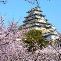 日本樱花花期由南至北逐渐开放