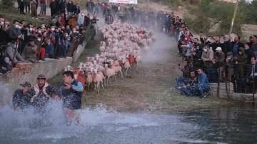 750 yıllık gelenek yaşatıldı, çobanlar göletten geçirdikleri sürüleri zapt etmekte zorlandı