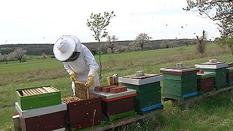 Imker bei Bienenstöcken