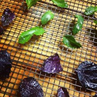 Candied Purple Basil and Mint