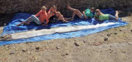 It takes 4 CIMI Instructors to make the length of an Oarfish, which grow to be 11m (36'); this particular one washed up on the shore of Catalina Island and was 18' long.