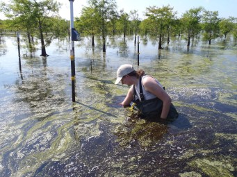 Valerie Schoepfer collecting field samples from Timberlake Wetland (NC).