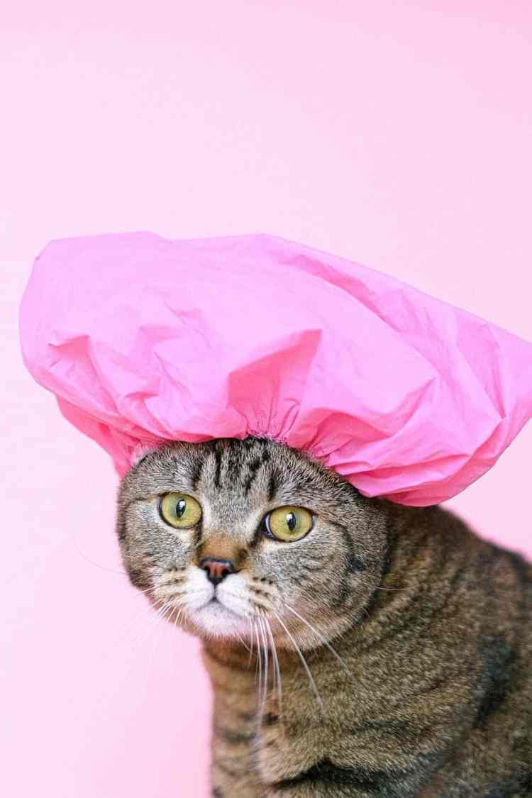 brown tabby cat wearing shower cap
