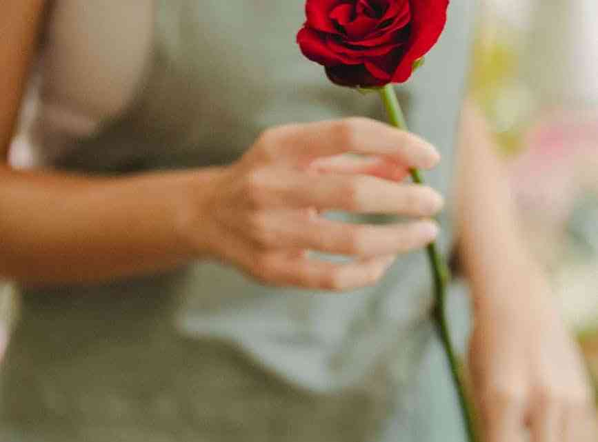 florist holding a red rose