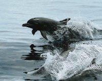 Delfines bahia de los delfines Bocas del Toro,Panama