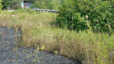 burnt area near lilacs