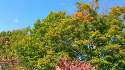 early fall colours