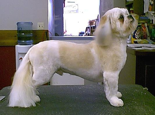 Karens Hairstyles  BURLANE CAT  DOG BOUTIQUE