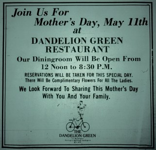 Dandelion Green, Burlington MA