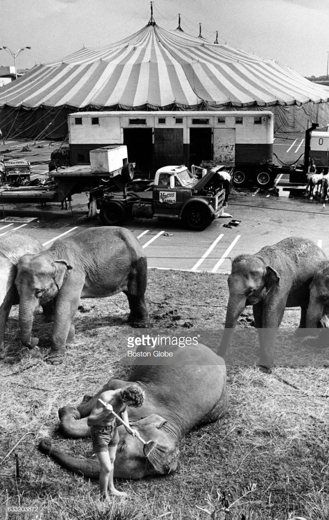 BURLINGTON, MA - SEPTEMBER 10: The Circus Vargas, one of the nation's largest tent shows, prepares for week-long stand at Burlington Mall, Sept. 10, 1974. (Photo by Ted Dully/The Boston Globe via Getty Images)