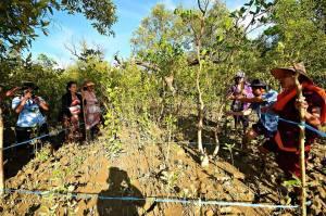 ဒီရေတောများ စိုက်နိုင်ရန်အတွက် လေ့လာမှု ပြုလုပ်စဉ်(Photo Credit - Montree Chantawong)