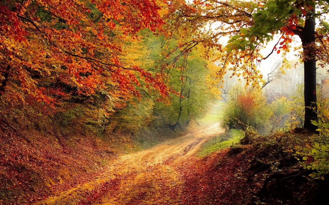 "6 Autumn Quotes that You'll ""Fall"" For"