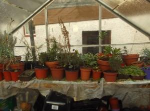 herbs banner