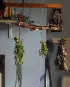 herbs drying