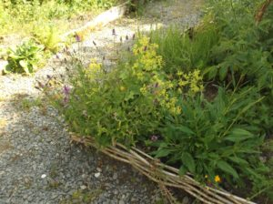 herb bed with low fence of hazel wattle