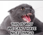 nice things cat