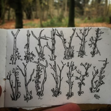 123/365 Saplings in Leigh Woods. About 10 mins all in. Notebook: Artemis. Uniball micro.