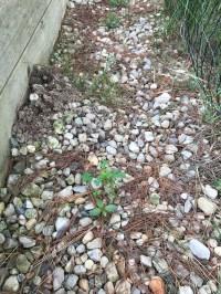Pests | Matt's Garden Blog