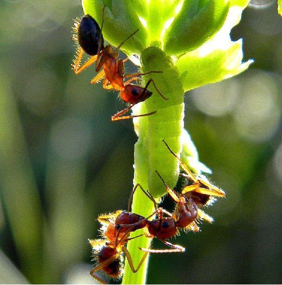 Ants in a garden.