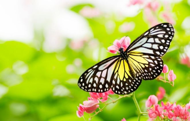 Butterfly on flower.