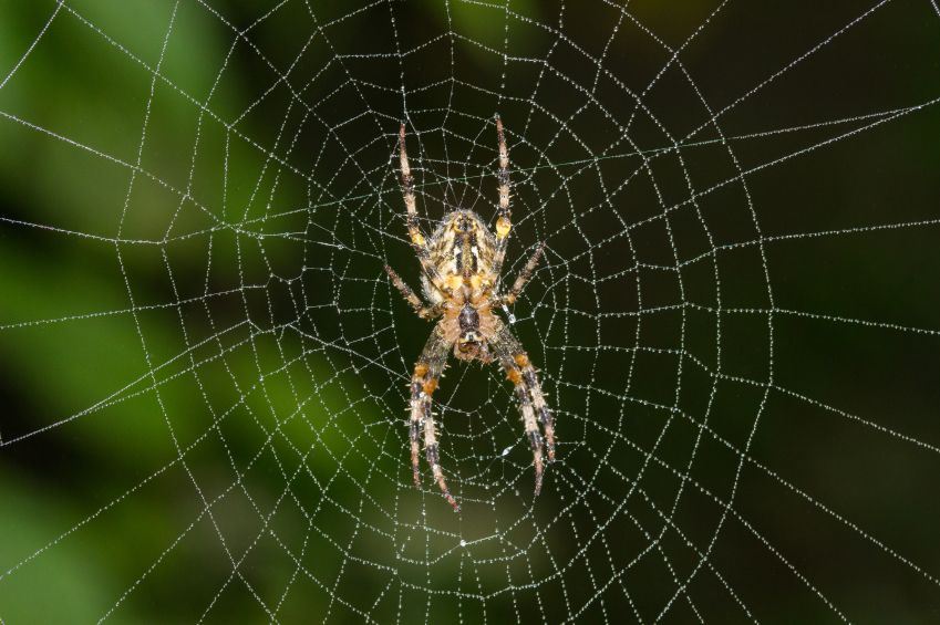 Spider on web.