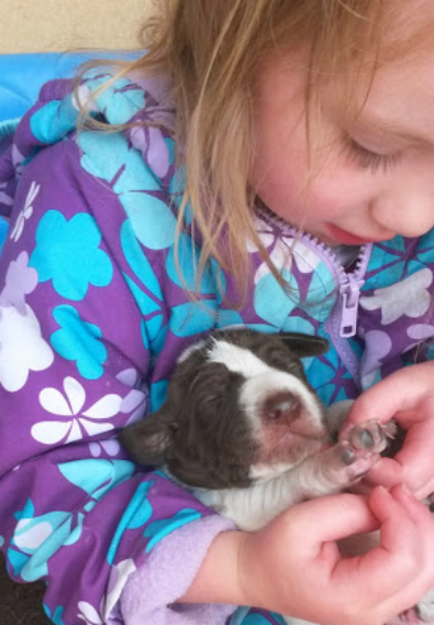 newborn german shorthair pointer
